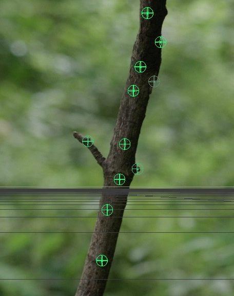 Bild der Trackingpunkte auf dem Ast